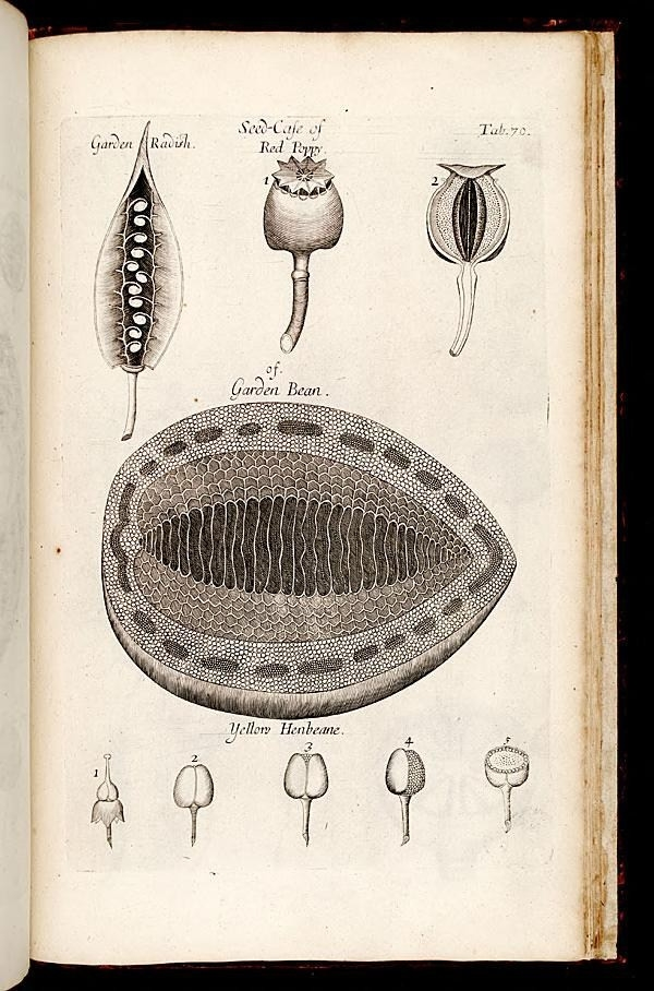 Book of the Week: The Birth of Microscopic Plant Anatomy ...