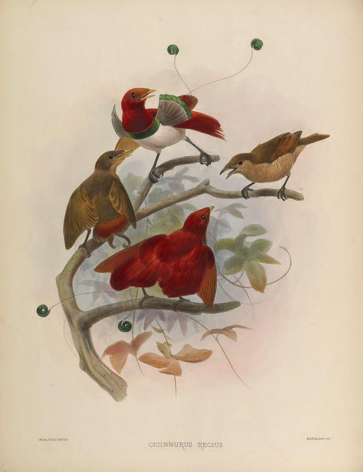 Visitors from Paradise: The Paradiseidae – Biodiversity