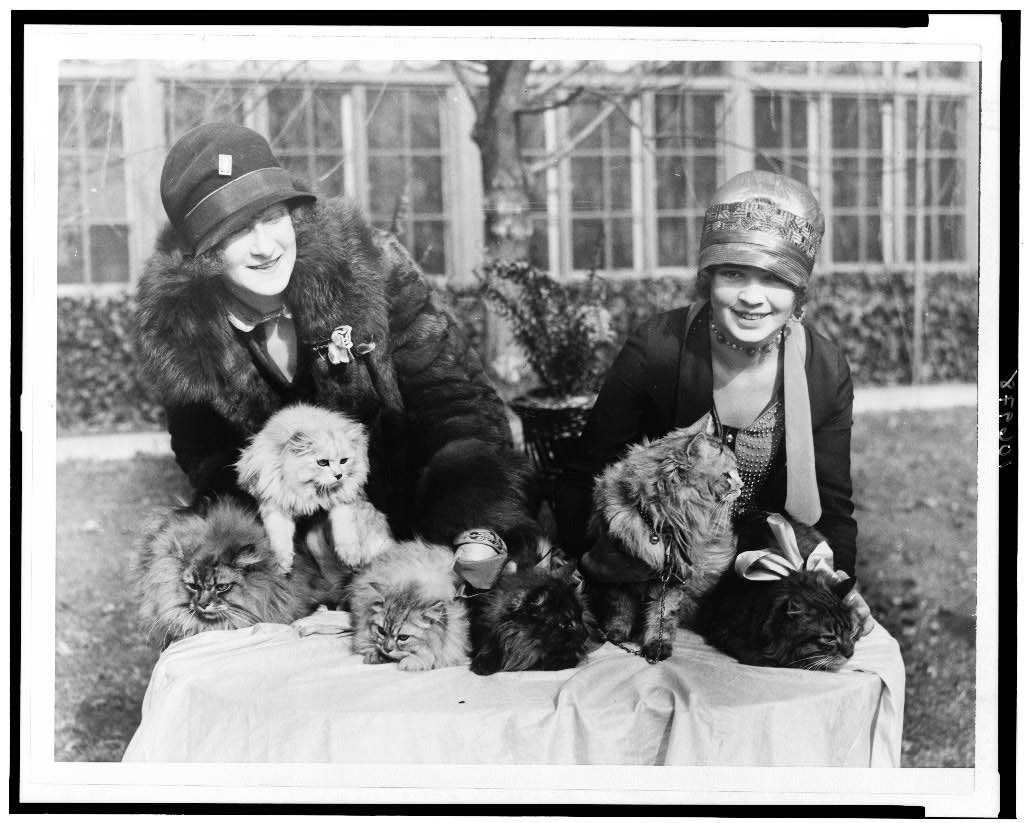 1c8273ba14c Edna B. Doughty and Louise Grogan with Persian cats. 1920s. Library of  Congress Prints and Photographs Division. https   lccn.loc.gov 93502603.
