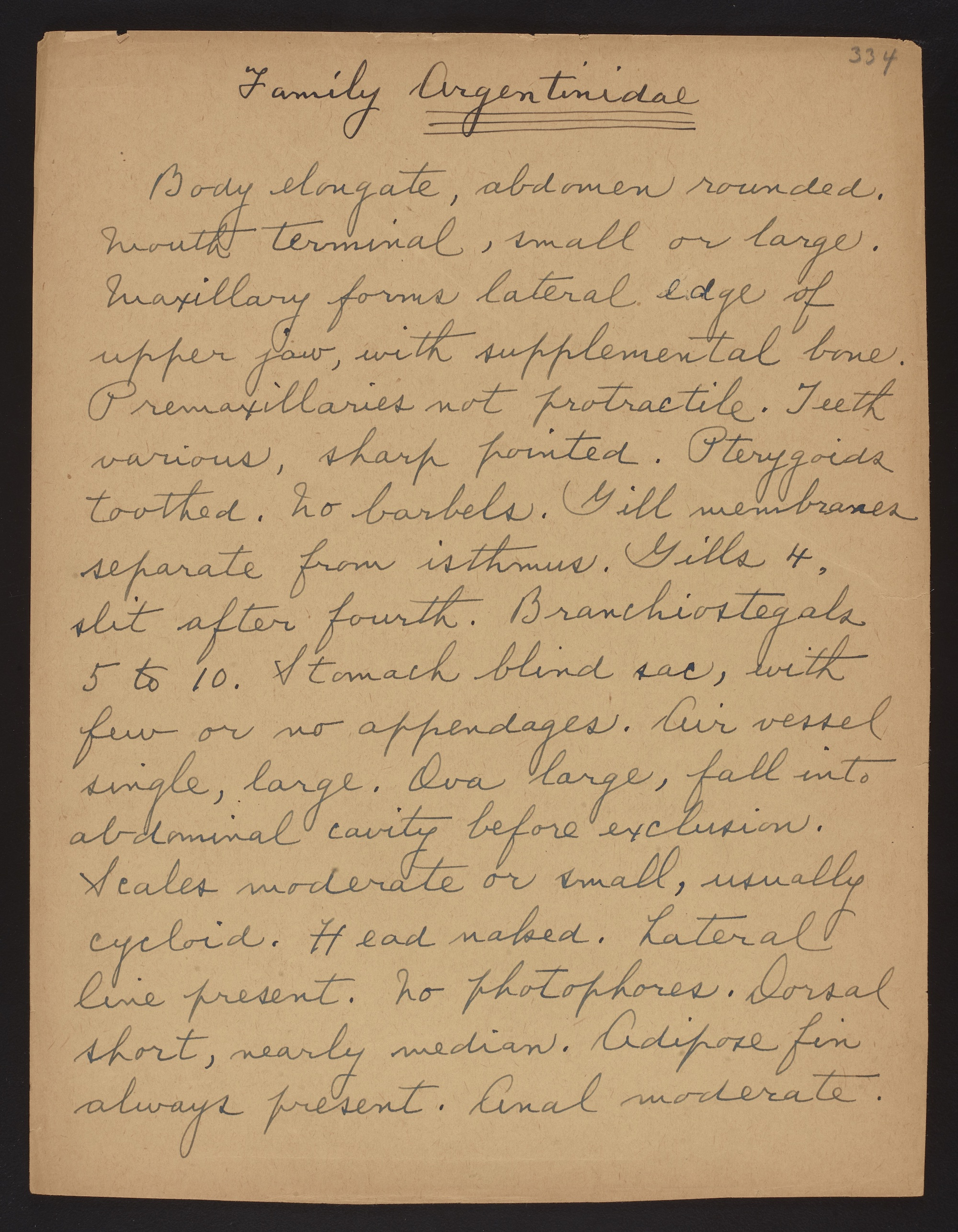 Fowler, Henry Weed. Manuscript of Henry Weed Fowler on the fishes of the Philippines, unpublished, circa 1930-1941. Families Argentinidae and Serpidae. Digitized in BHL by Smithsonian Institution Archives.