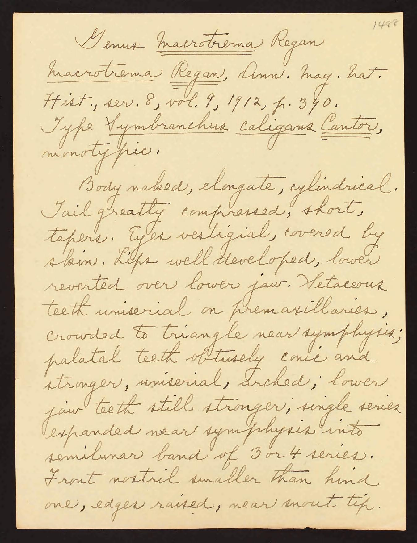 Fowler, Henry Weed. Manuscript of Henry Weed Fowler on the fishes of the Philippines, unpublished, circa 1930-1941. Order Synbranchii. Digitized in BHL by Smithsonian Institution Archives. https://biodiversitylibrary.org/page/55811117