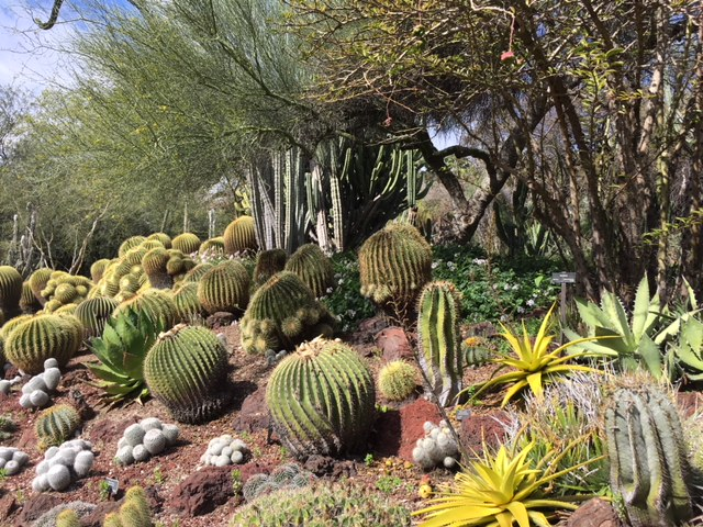 collection of cacti and other succulents at an outdoor garden