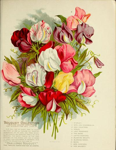 vicksgardenflora1898jame_00411.jpg