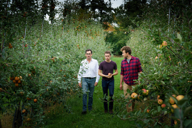 Three caucasian males walking in an apple orchard.