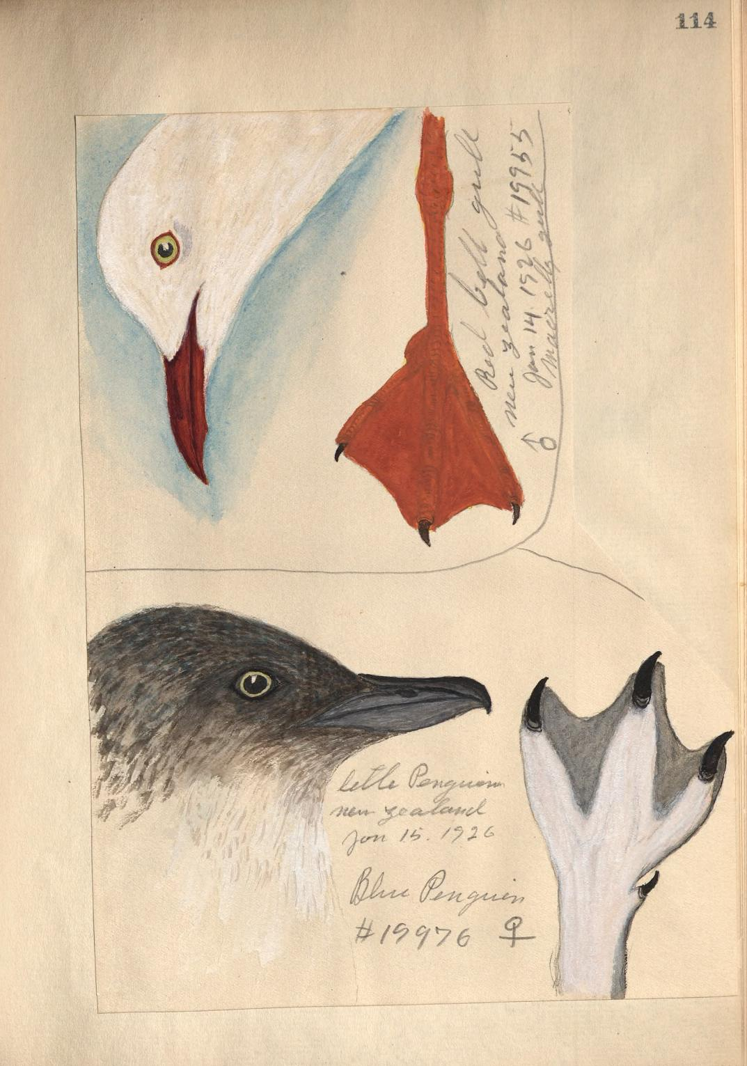 drawings of sea birds