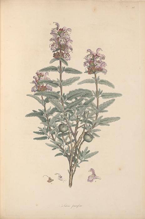 Illustration of a plant