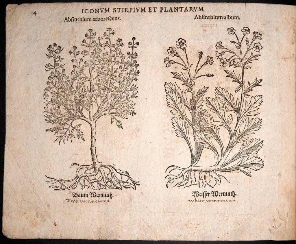 Woodcut from Eicones plantarum_