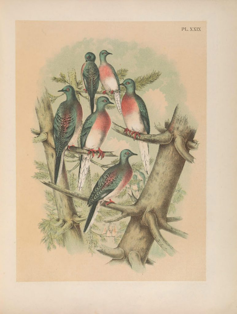 passenger pigeons sitting in a tree