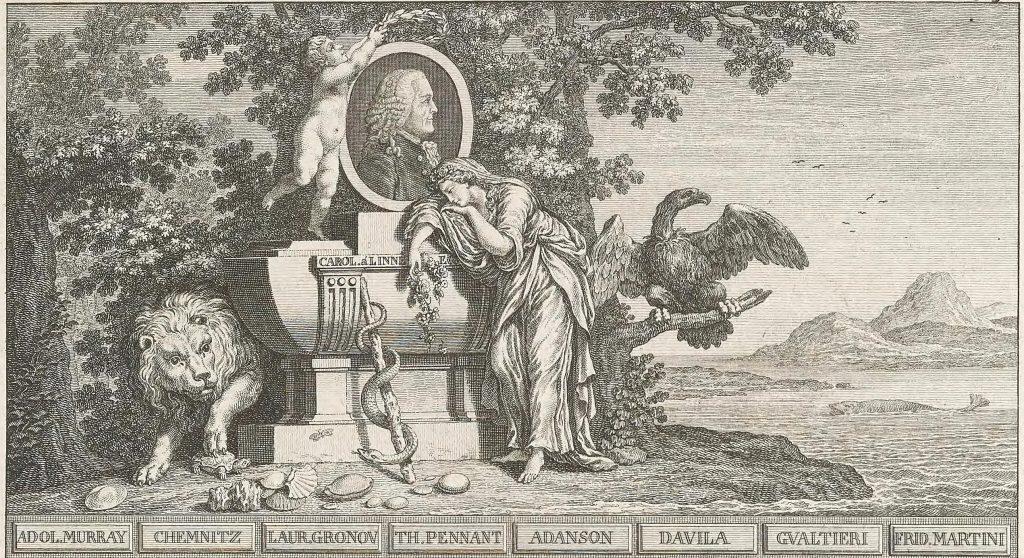 Linnaeus' tribute