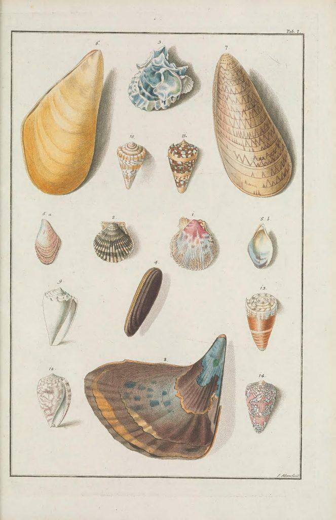 illustration of shells