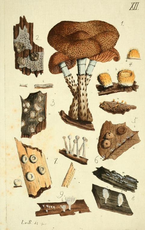fungi illustration