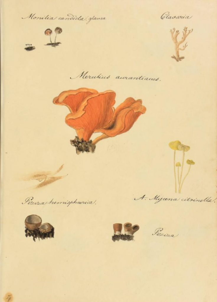 illustration of fungi
