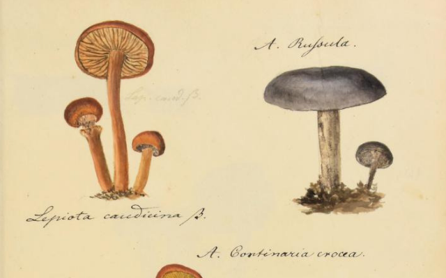Uncovering Mycological History Through Art