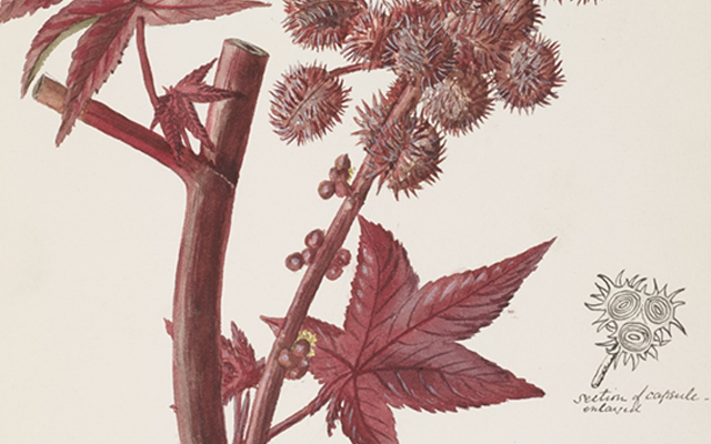 Passionate Pioneers in Botanical Art