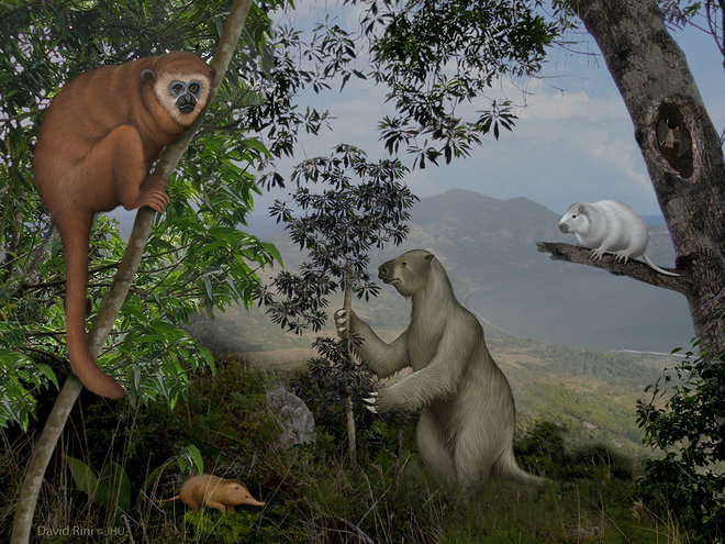 Digital illustration of several mammals in a rainforest.