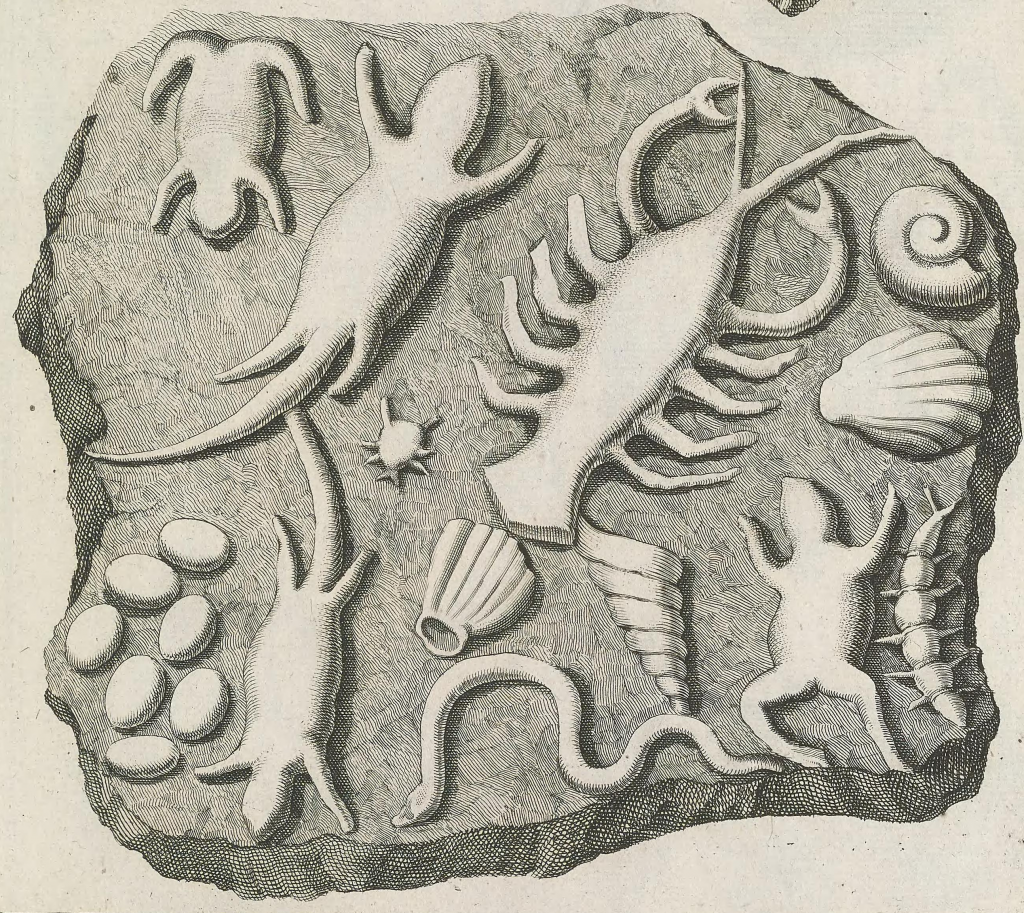 Illustration of fake fossils