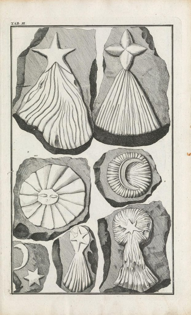 Illustration of fake fossils.
