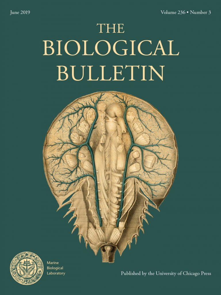 Cover of the Biological Bulletin with a horseshoe crab on it.