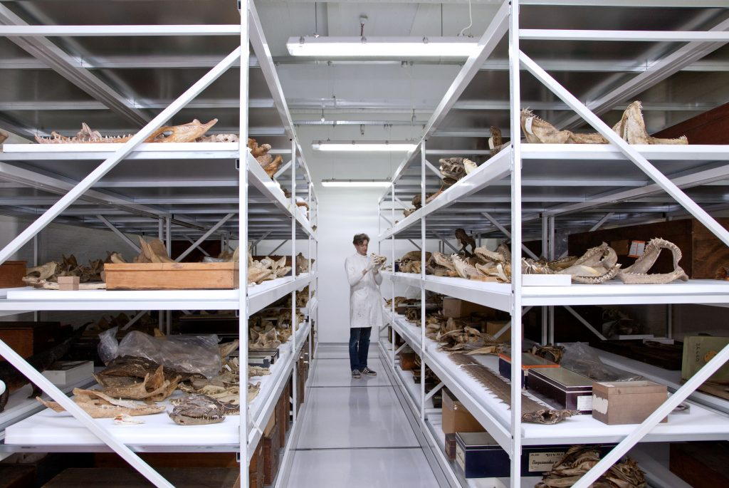 Man standing in a storage room for fish specimens.