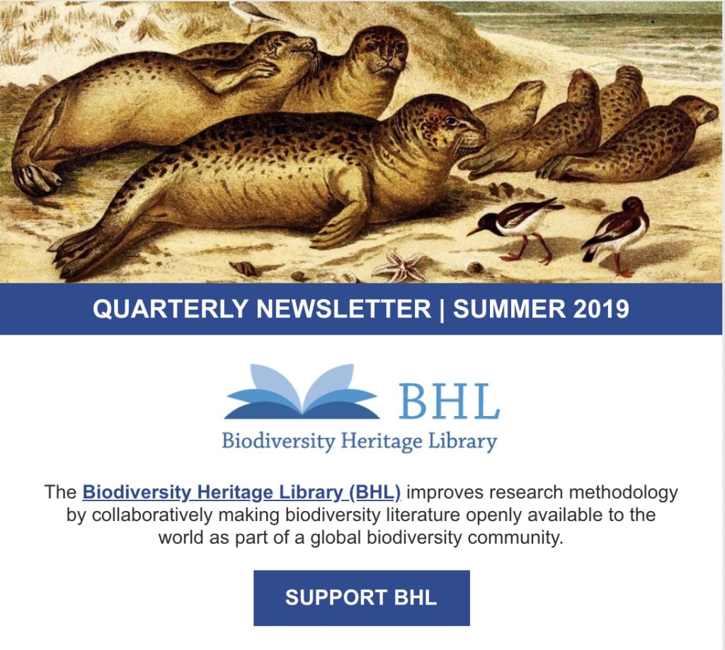 screenshot of the summer 2019 newsletter