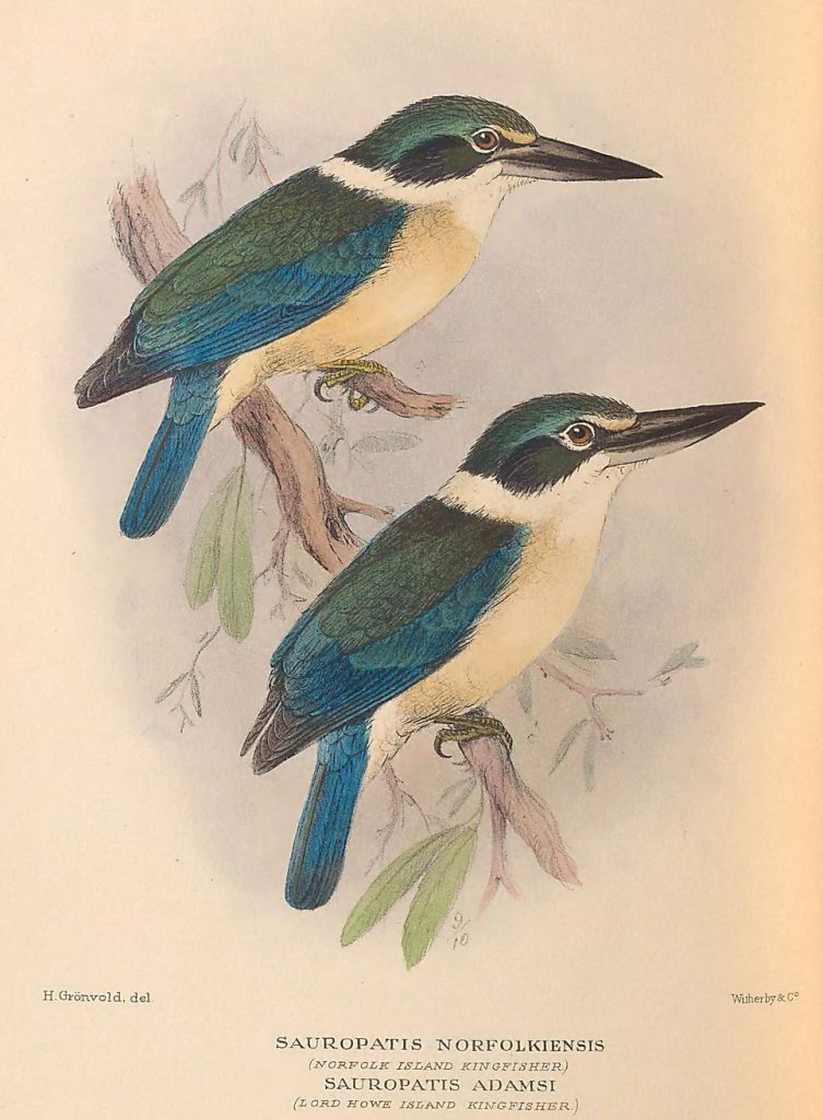 illustration of blue and green birds