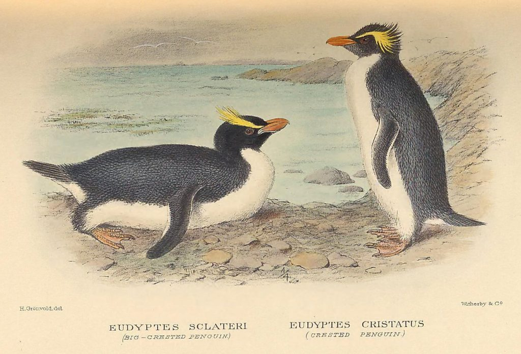 illustration of penguins