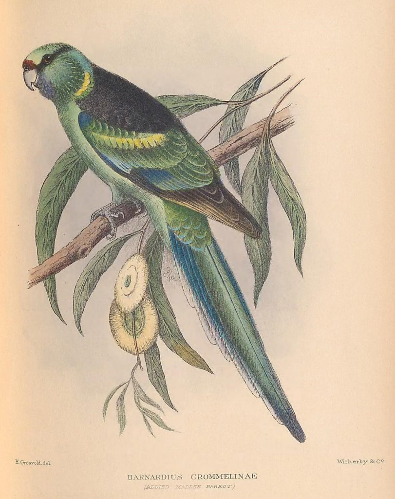 illustration of green bird