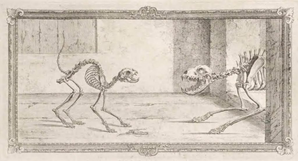 skeletons of a cat and a dog confronting each other