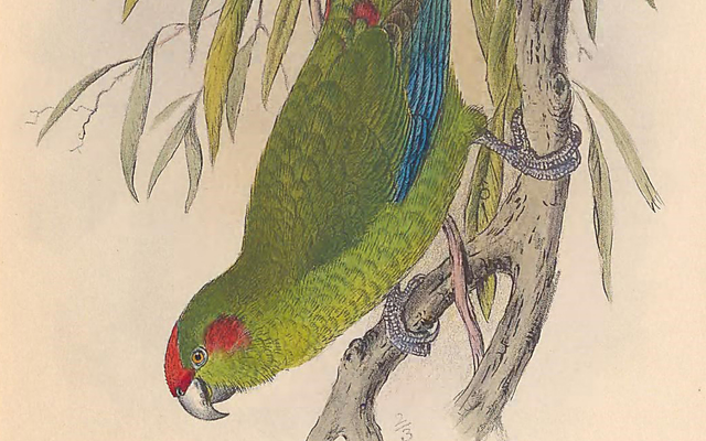 Digitizing Birds for BHL