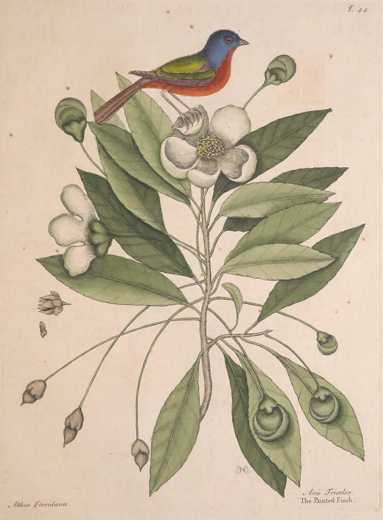 illustration of a bird on a flower