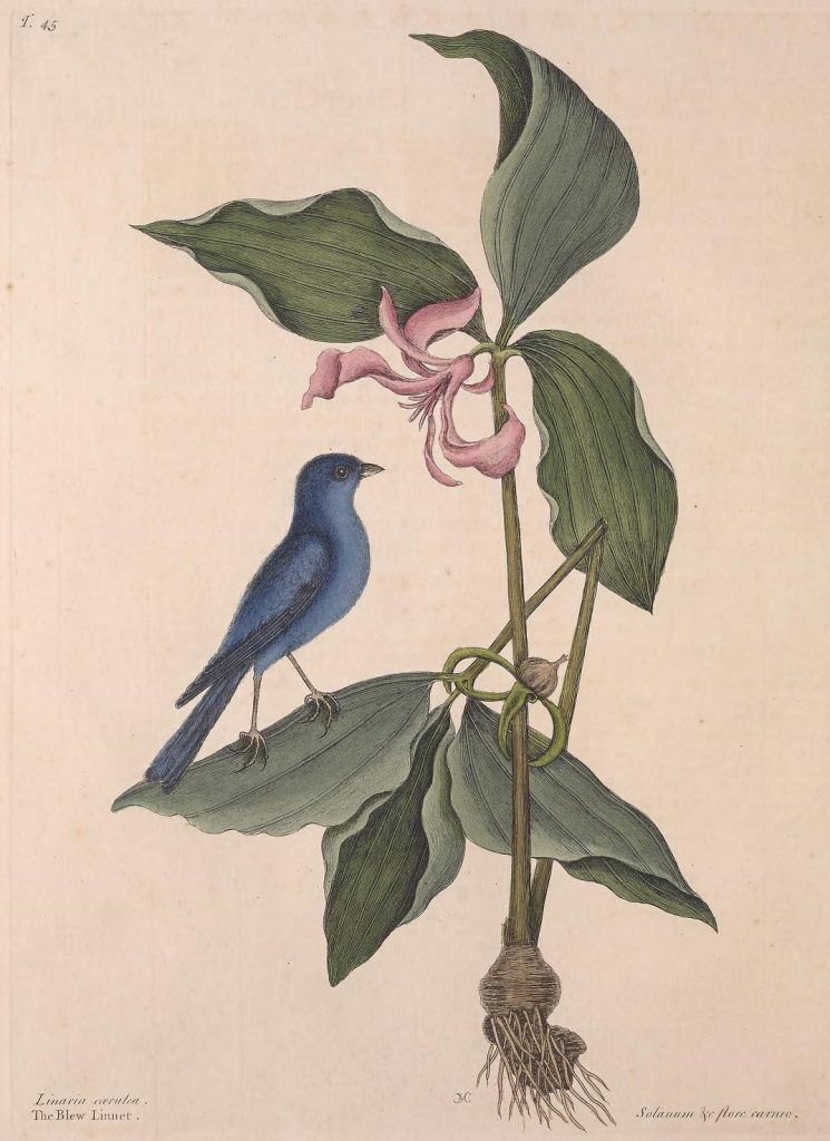 illustration of a blue bird on a plant
