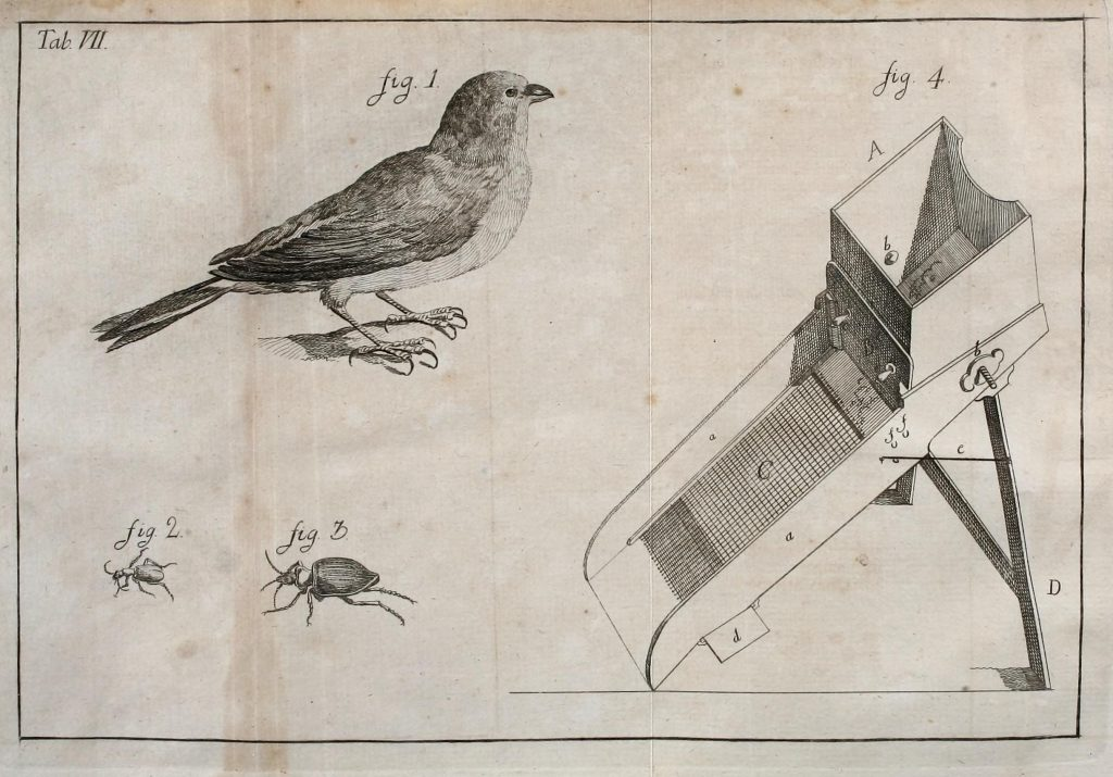 illustration of a bird, box, and insect