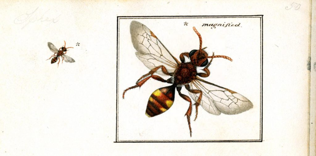 illustration of a bee at scale and magnified