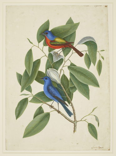 illustration of two birds on a plant