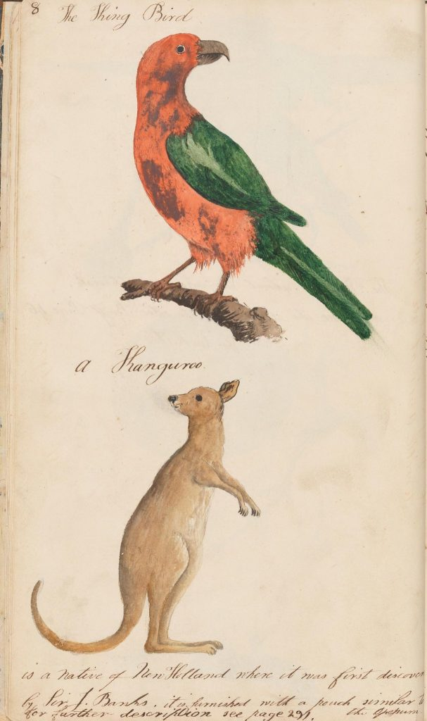 illustration of a bird and kangaroo
