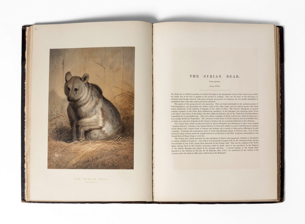 illustration of a bear in a book alongside text