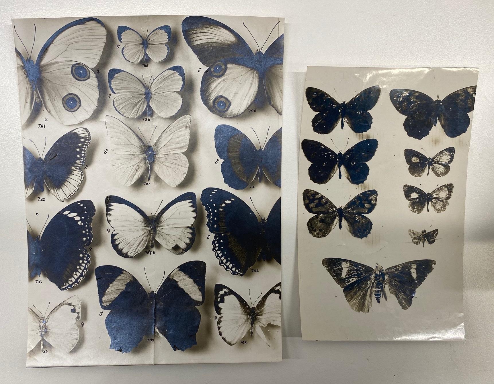 Butterfly photos.jpg