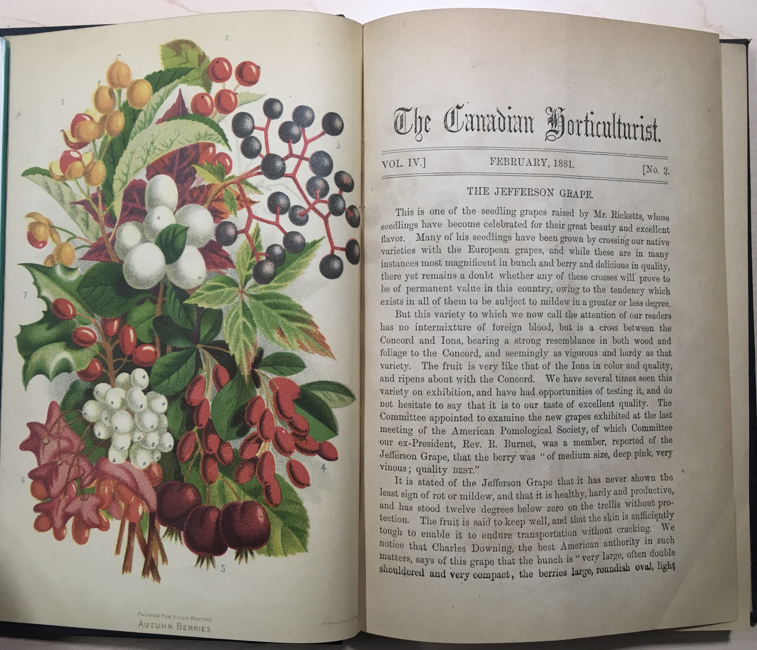 open book with flower illustration on left and text on right
