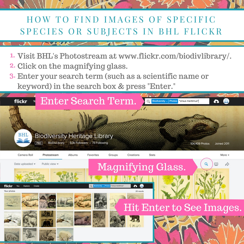 Instructions on how to find images in the BHL Flickr