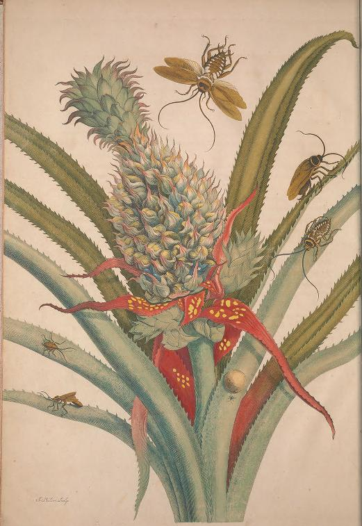 illustration of a pineapple with cockroaches