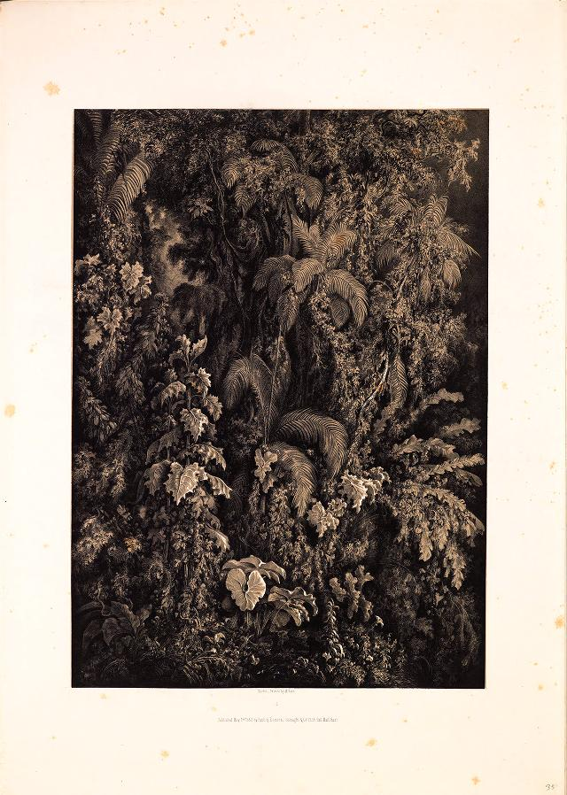 Black and white illustration of dense vegetation in a forest.