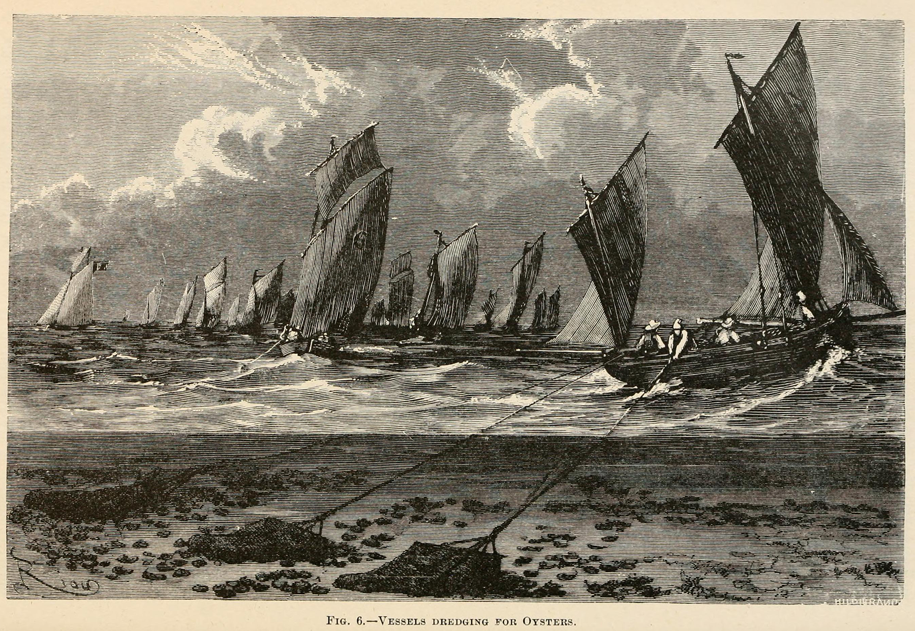 black and white illustration of ships at sea dredging for oysters