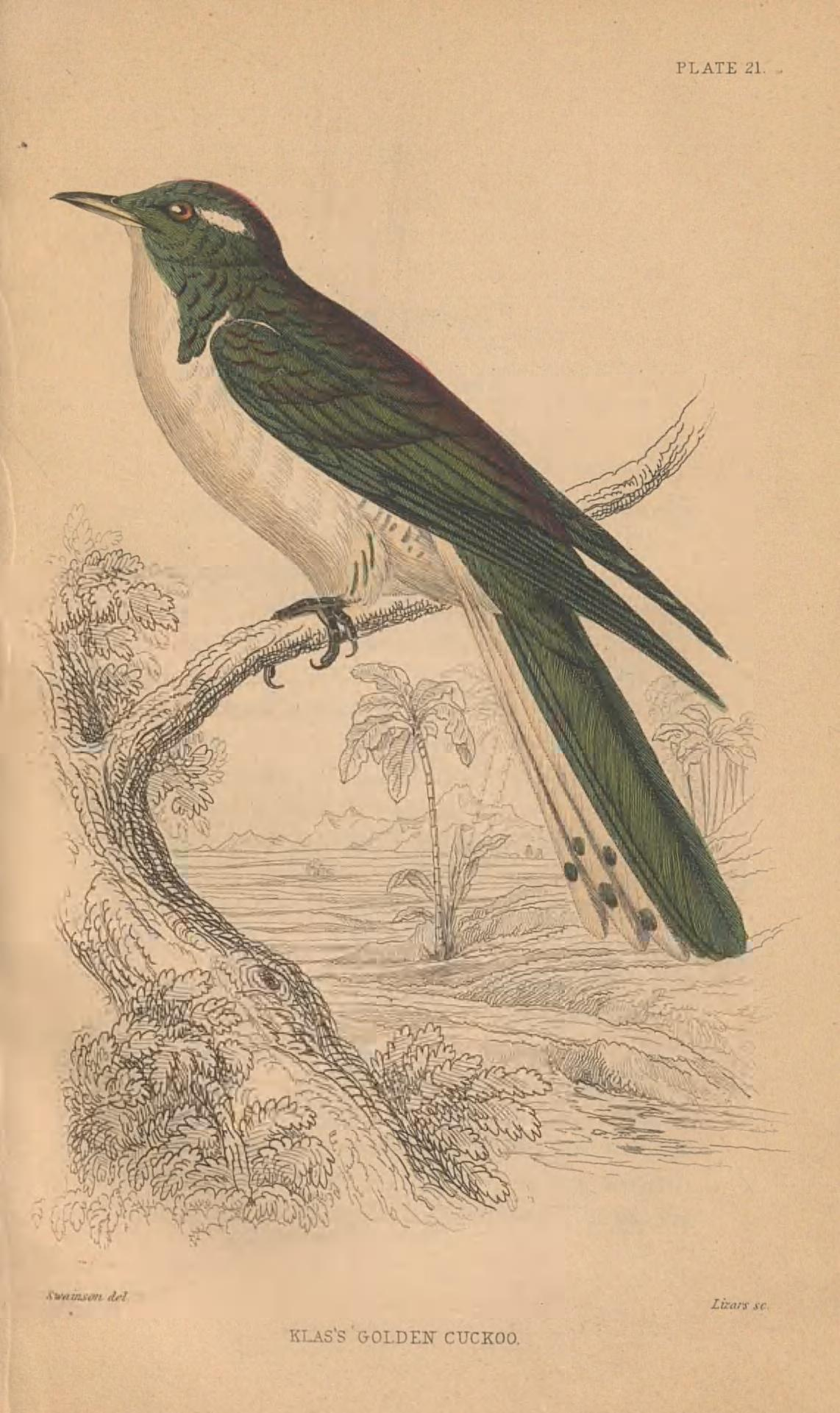 white and green bird sitting atop a black and white sketch of a branch