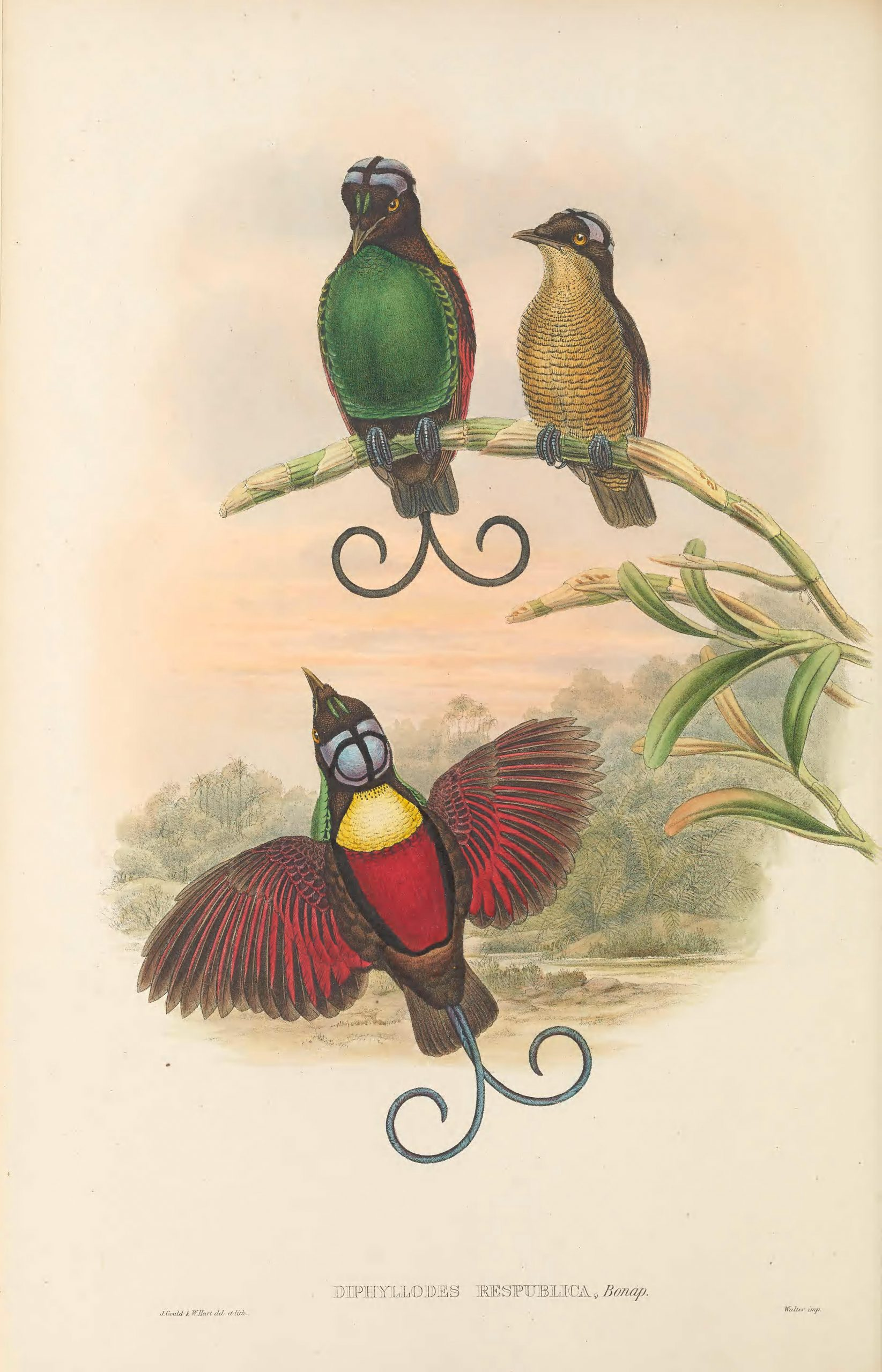 three birds, one red and in flights, one green, one yellow, the latter two seated on a branch