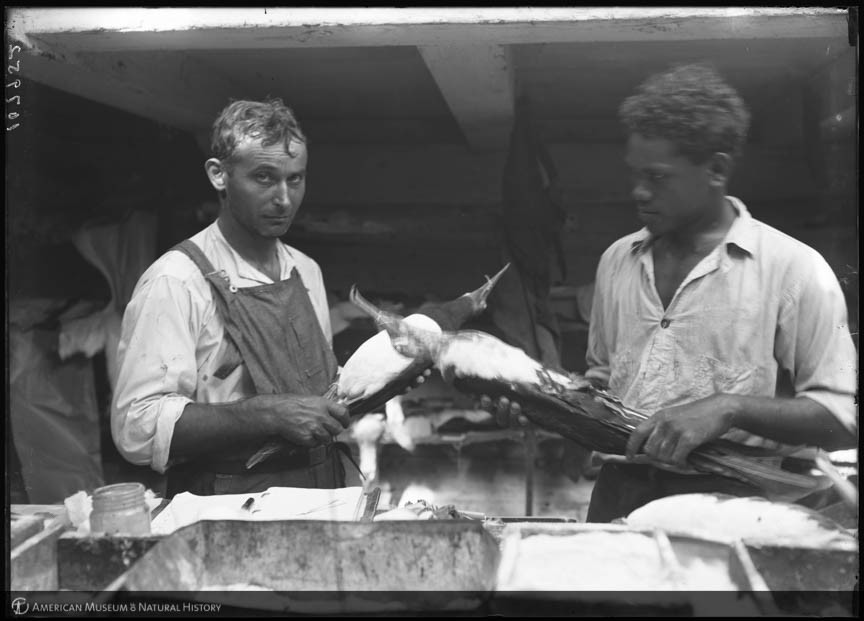 Black and white photo of two men working in a bird specimen preparatory setup.