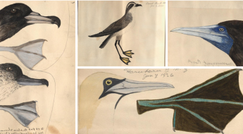 collages illustrations of various bird heads and feet