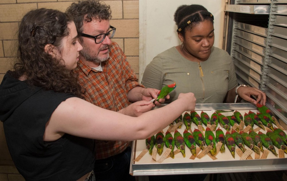 three people looking at an open drawer of green and red bird specimens