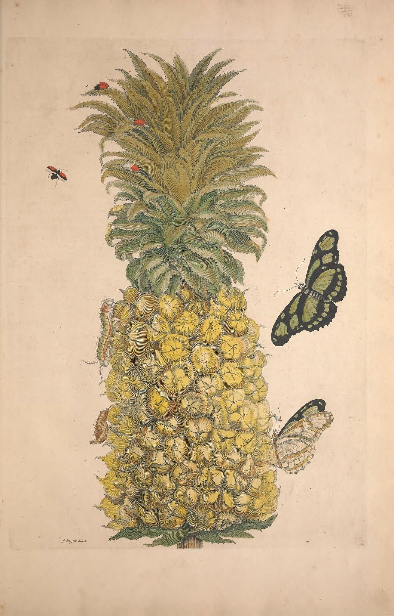 illustration of a pineapple with butterflies