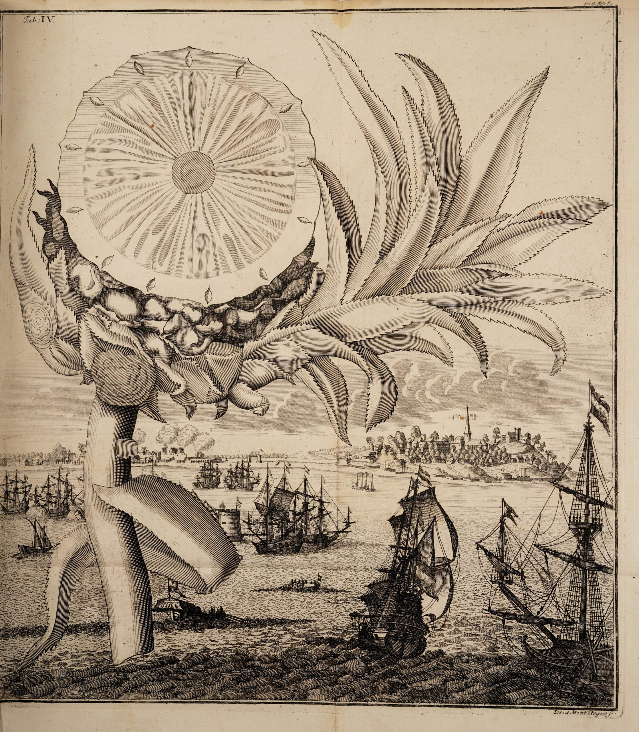 woodcut illustration of a sliced pineapple hovering above ships