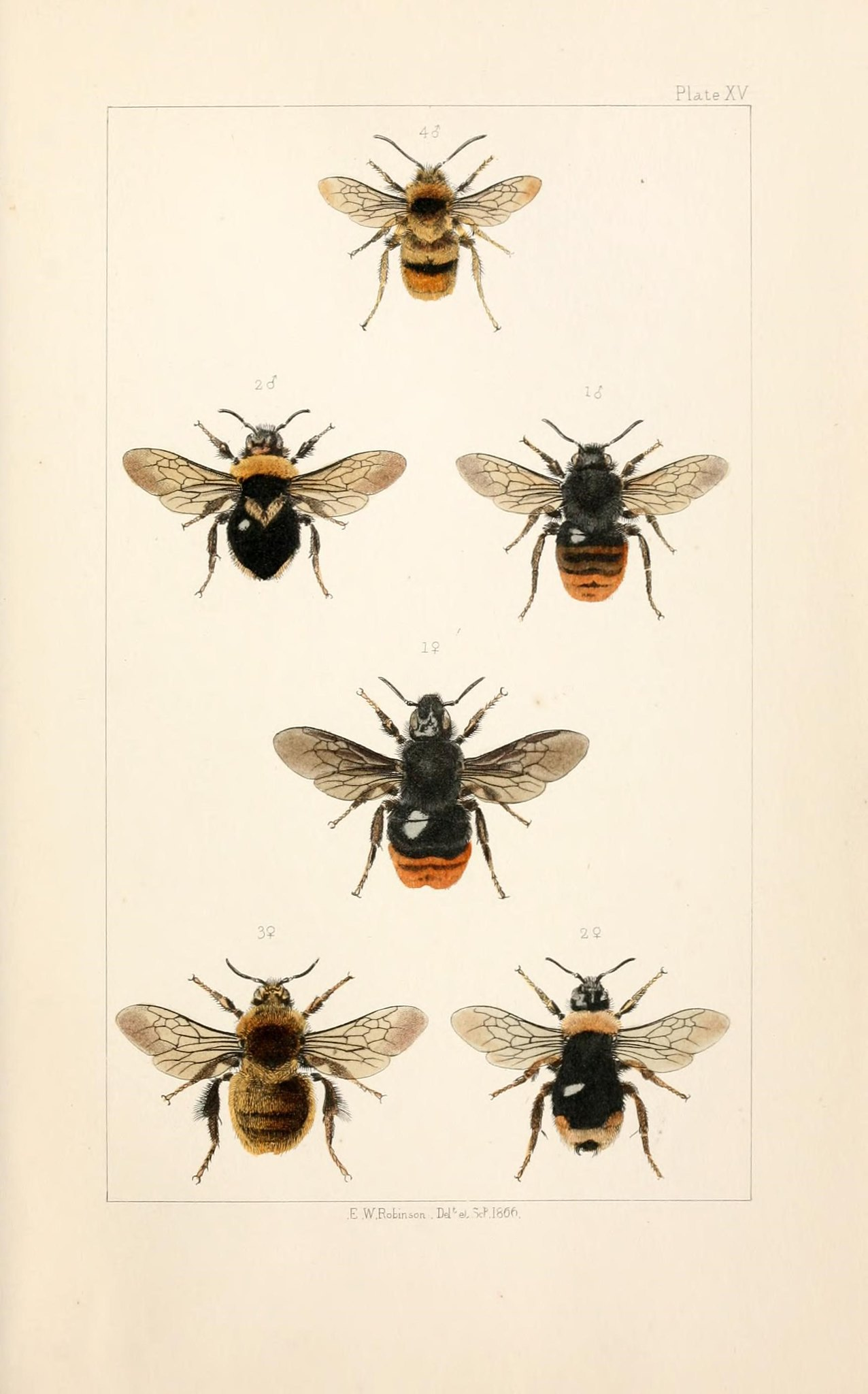Illustration of bees.